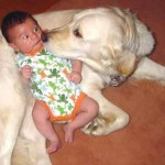 собаки и дети в доме