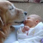 смешные новорожденные
