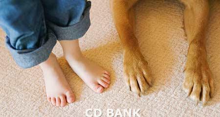 выбираем ребенку домашнее животное