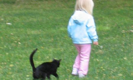 ребенка кошка укусила