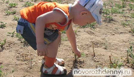 ортопедическая или обычная первая обувь ребенка