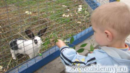 знакомим детей с животными