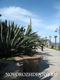 отзыв о парке Парадиз