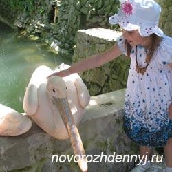 отдых в Крыме - Пеликан