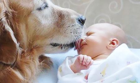 домашние животные и новорожденный