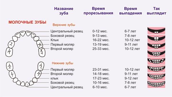 схема лечения от паразитов и простейших