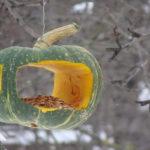 кормушка из тыквы